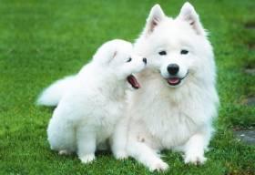 cухие корма для собак
